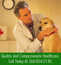 1773109_Veterinary_Services___Rome_City__IN___Sylvan_Lake_Animal_Clinic___Image_2.jpg